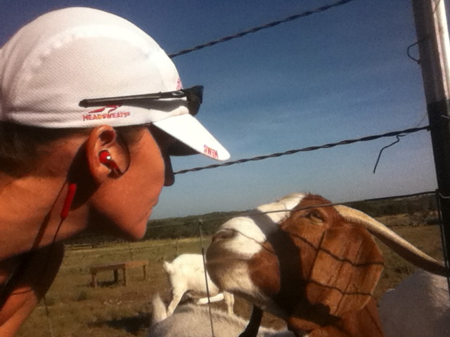 Even goats think Race Hats are cool.